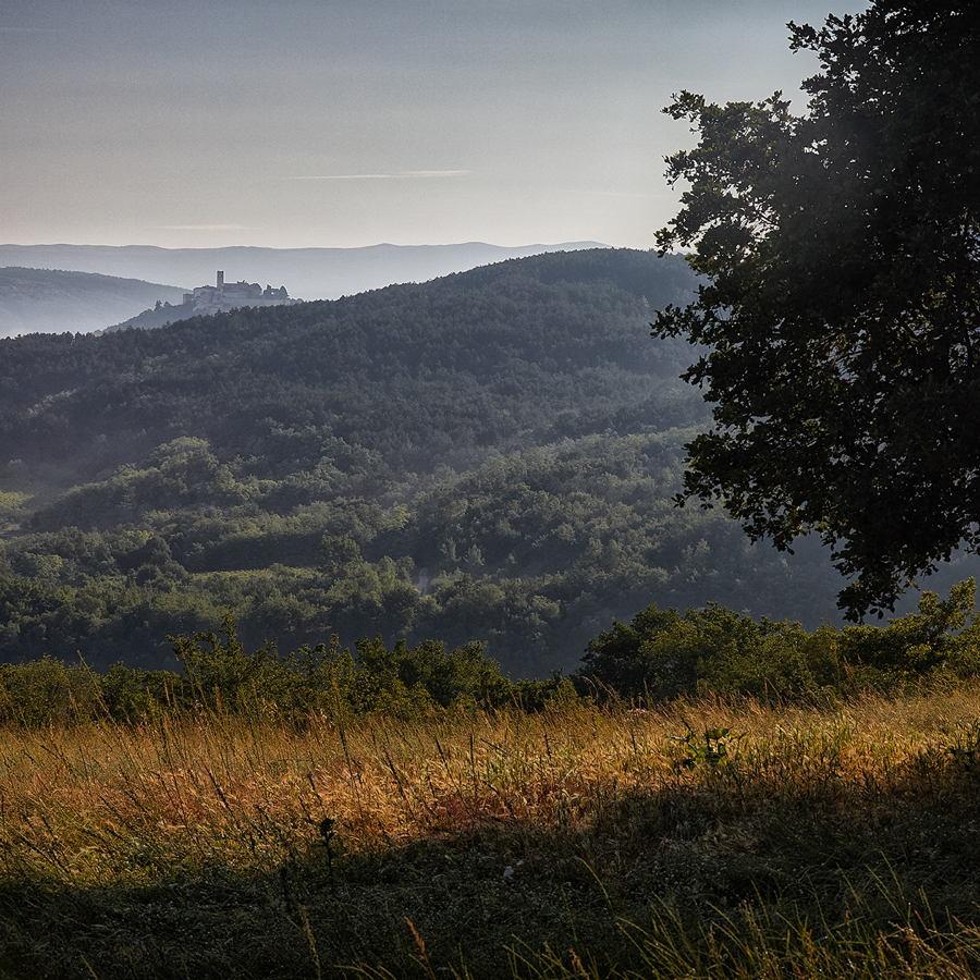 prema_motovunu_2018.jpg - © Zoran Osrečak